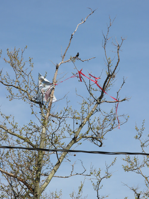 a bird and a kite in a tree