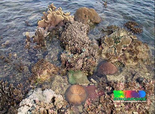 Living reefs of Raffles Lighthouse, Singapore