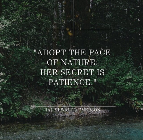 Quote Nature Qotd Wise Words Grow Patience Ralph Waldo Emerson