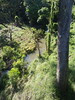 Old North Road: Warabah Creek