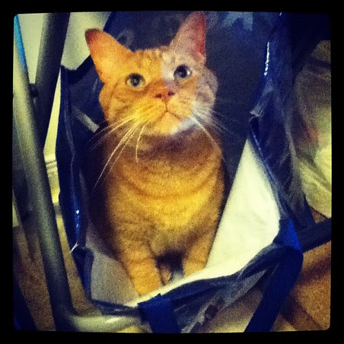 I wouldn't give him attention so he climbed in the recycling bag. #gingercat #catsofinstagram
