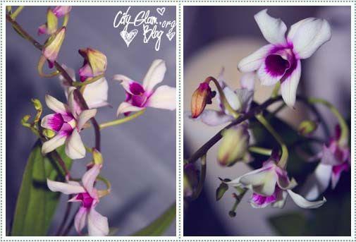 http://i402.photobucket.com/albums/pp103/Sushiina/Daily/daily_flower.jpg