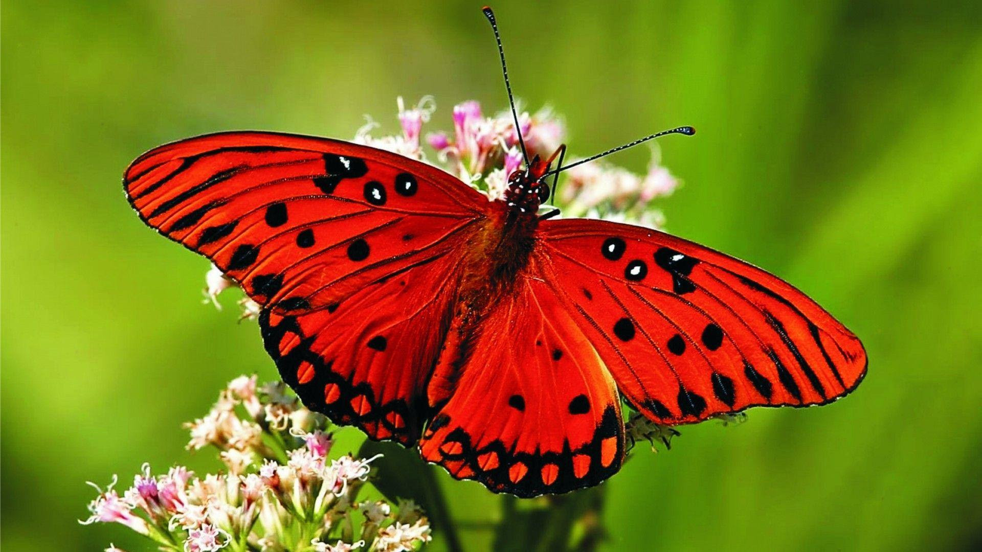 HD Butterfly Wallpapers - Wallpaper Cave