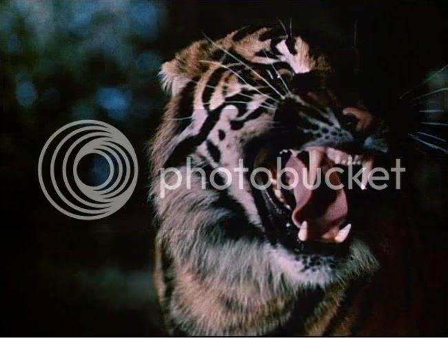 photo tigre_bengale-05.jpg