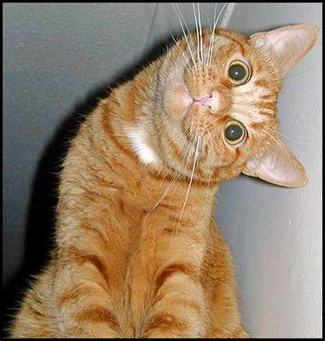 foto kucing lucu lucugambar gambar aneh