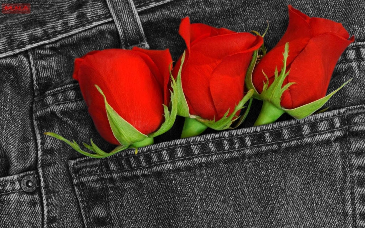Red, Red Rose - roses wallpaper