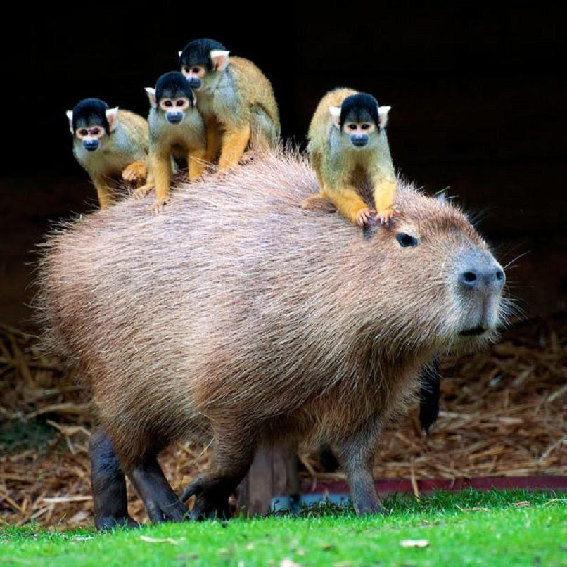 Самі незвичайні фотографії тварин за версією The Telegraph