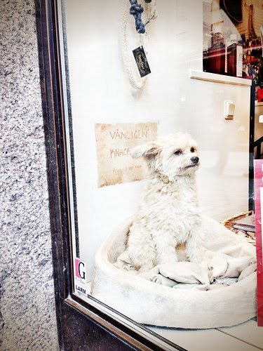 a dog in the window