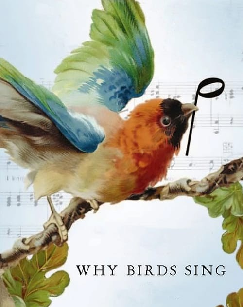 Sing Movie4k