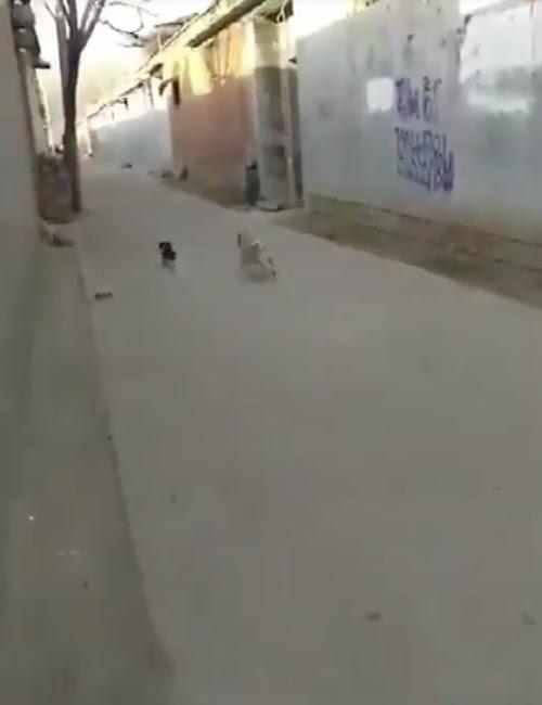 Un perro iba a atacar a un cachorrito, llegan unos aliados inesperados y enseguida se arrepiente
