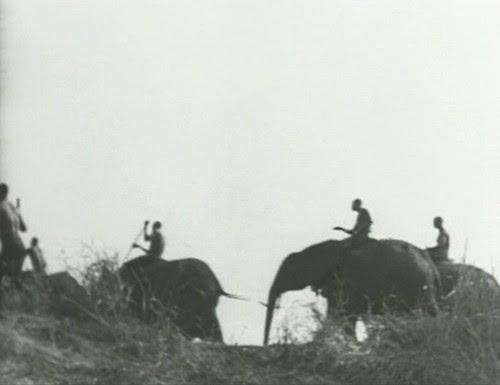 Elephant%20Capture-16 by bucklesw1