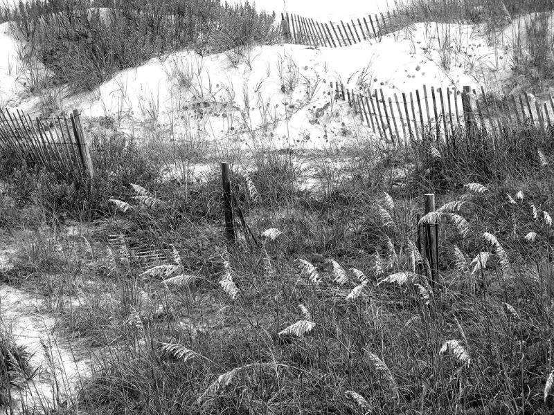 resize weekend b and w dune 1976
