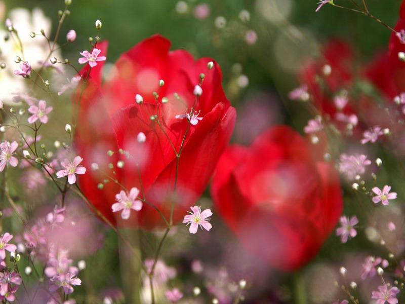 http://img.xcitefun.net/users/2010/01/139286,xcitefun-rain-kissed-flowers-2.jpg