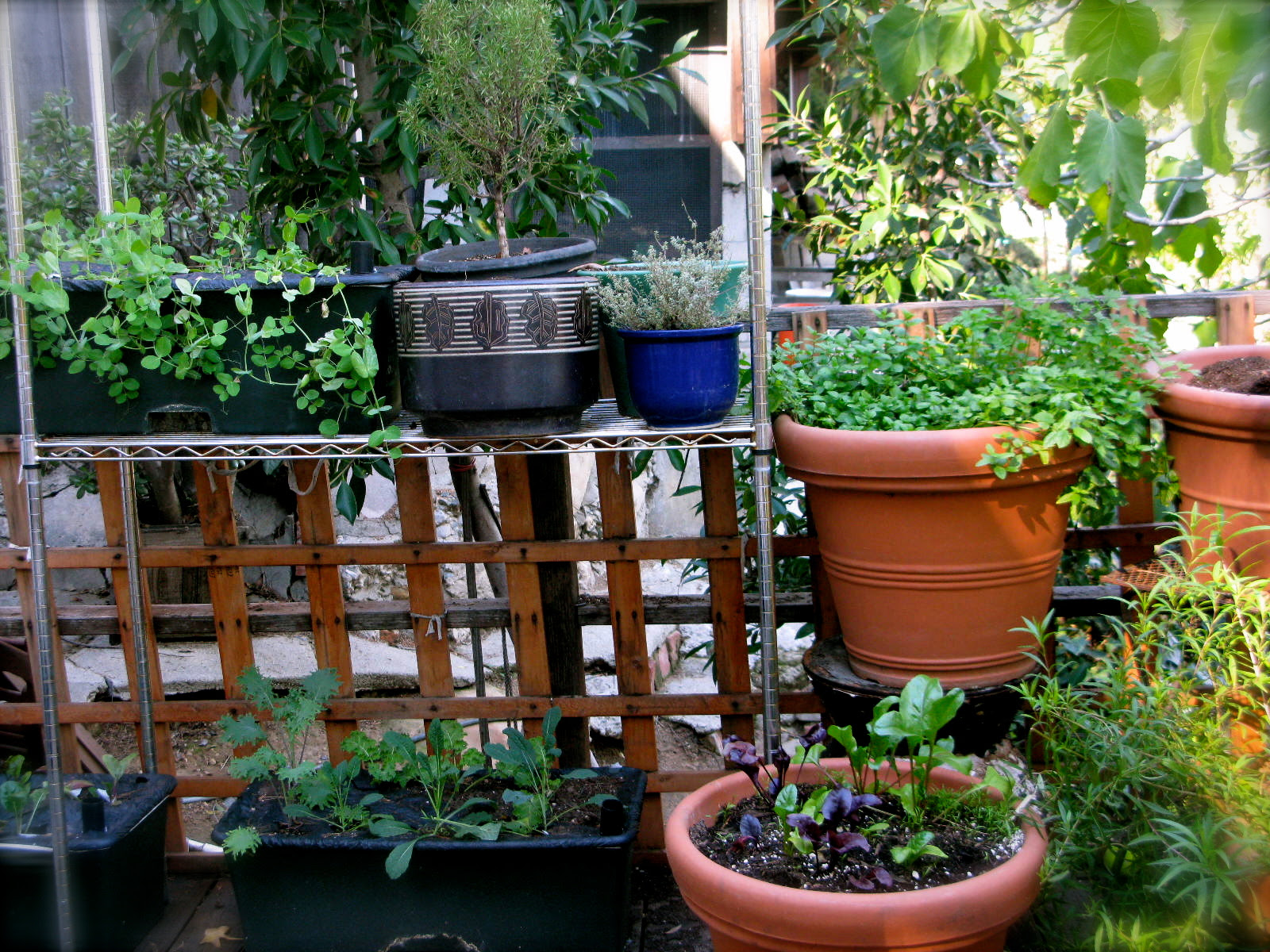 My Patio Farm | An urban gardener grows in LA