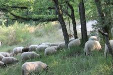 Chantier de soutien au projet pastoral de la plaine de Macherin