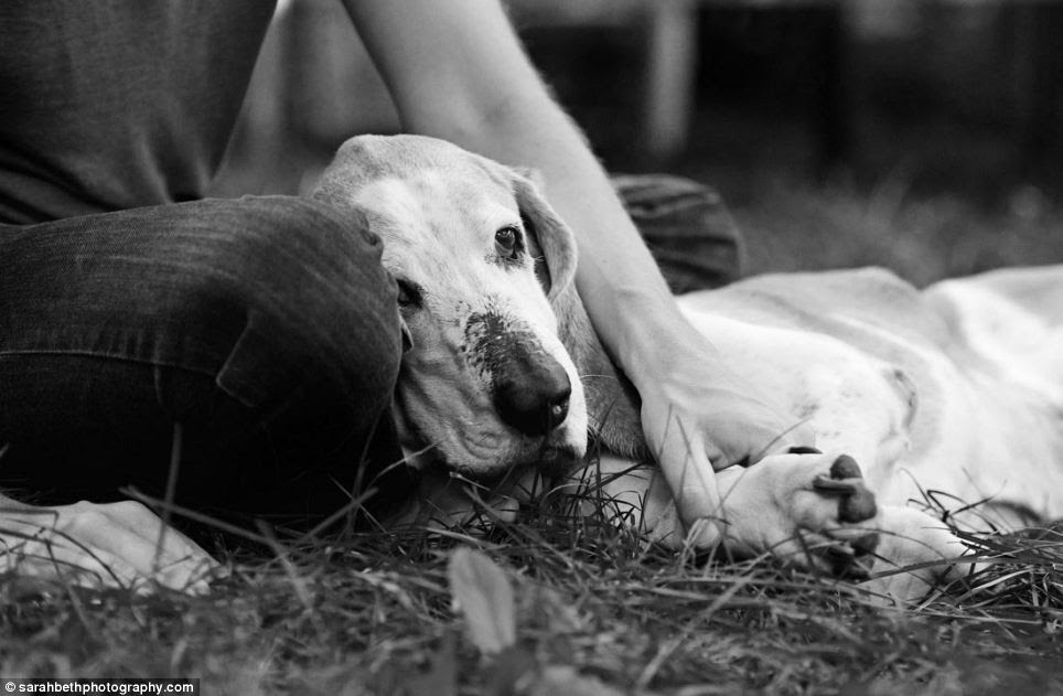 Last rites: An owner strokes his pet in the park before the terminally ill dog dies