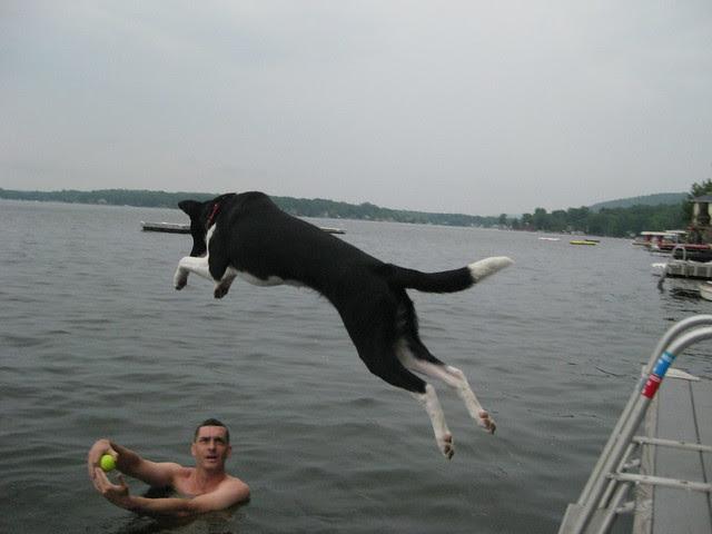 dog days of summer no. 3