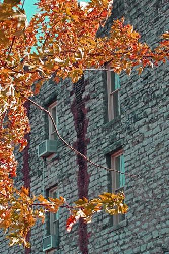 Autumn Limestone