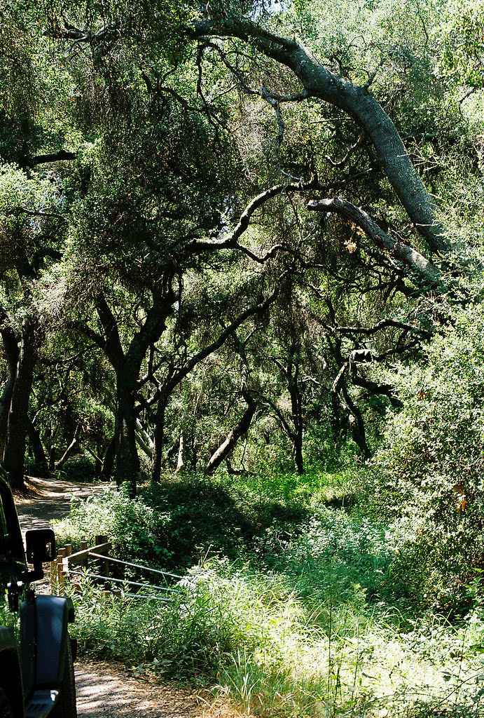 Road to our cottage in Topanga Cottage