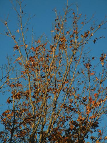 DSCN7287 - Fall Leaves