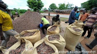 Récolte de cacao en Côte d'Ivoire