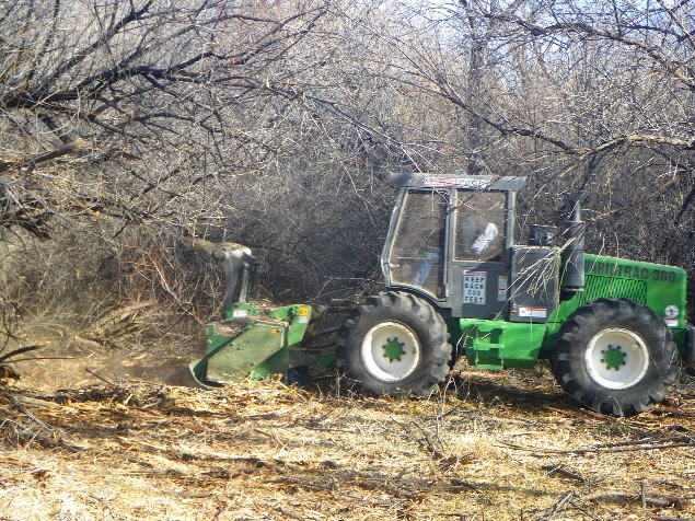 Crews cut a swath through the dense underbrush and trees alongside the San Juan River at the Hammond Tract. Photo courtesy of Marc Wethington.