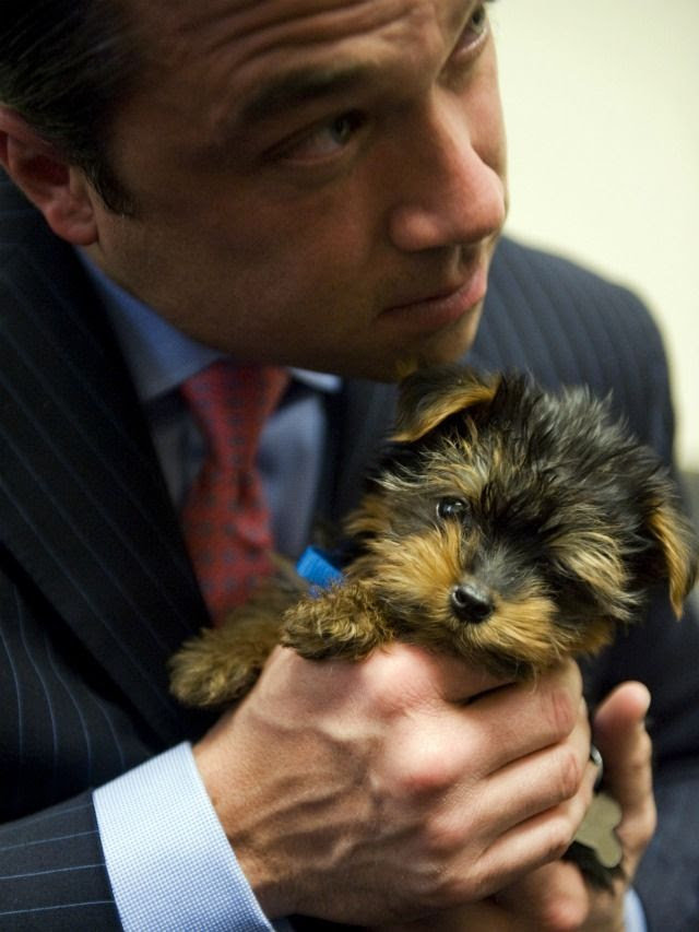 http://comedycentral.mtvnimages.com/images/shows/indecision/gallery/pets_politicians/michaelgrimm-puppy-640x853.jpg