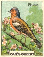 gilbert oiseau 7
