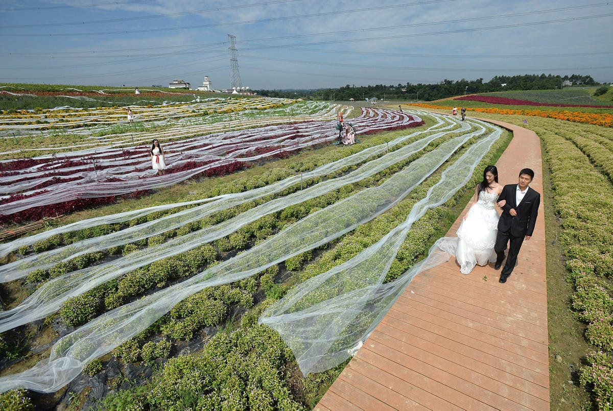 Staff members dressed as newlyweds walk along a path as they display a 4,483 yard wedding dress train trailed along shrubs, during a promotional event on Sept. 24 in Chengdu, China. The train costs $6,520.