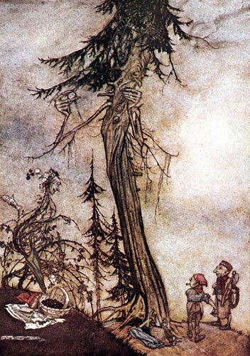 Abies et Rubus