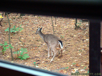 Does a deer poop in the woods?