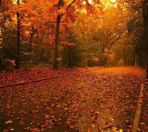 autumn wallpapers  desktop wallpaper cave