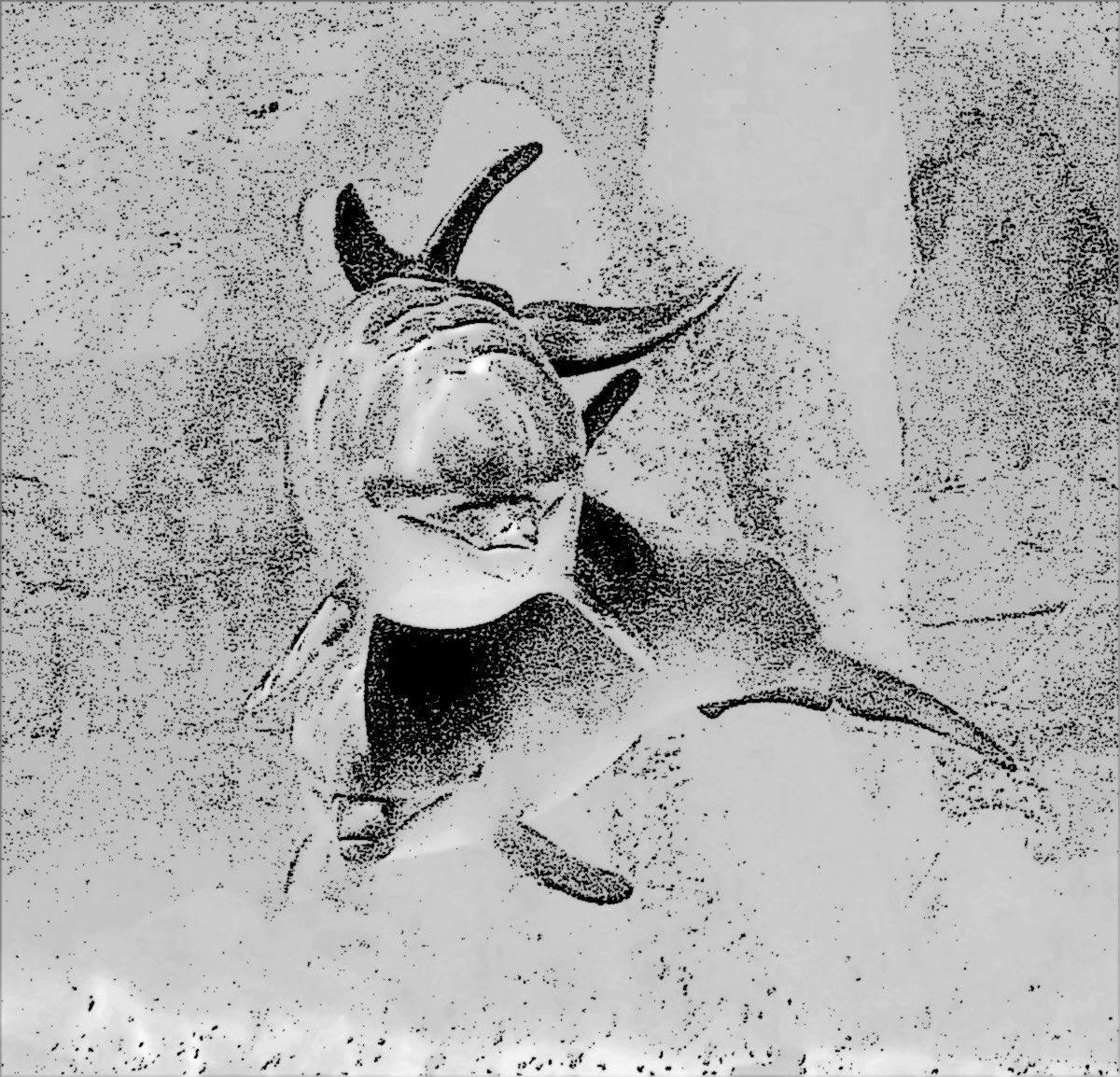 malvorlagen delfin j