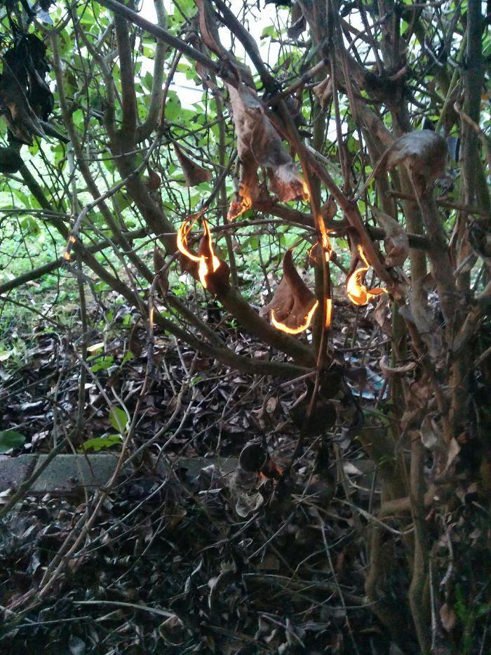 El sol da de lleno en estas hojas secas y parece que se han prendido fuego