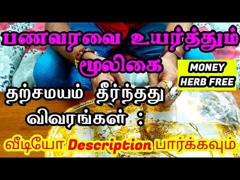 பணவரவு மூலிகை வேர் இலவசம் | MONEY HERB FREE