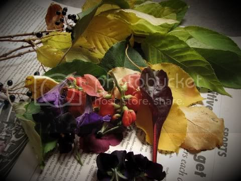 Natural dye materials