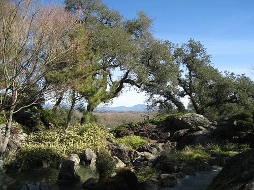 Arista Winery's Japanese garden