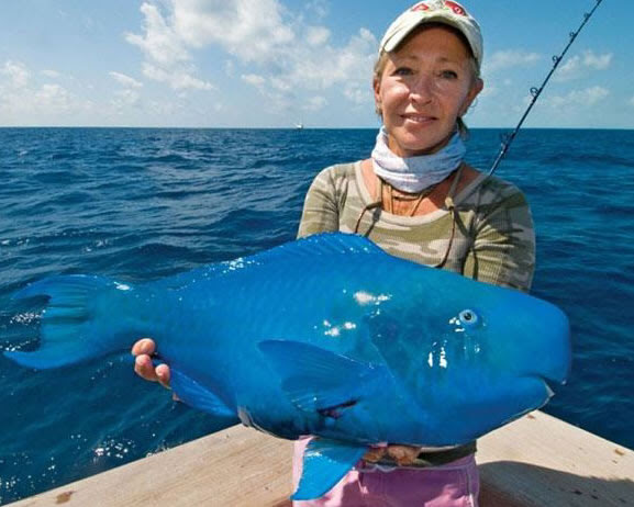 The Blue Parrotfish
