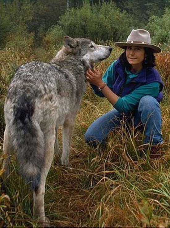 Ζώντας με τους λύκους (3)