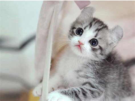 gambar kucing lucu  imut ragam info