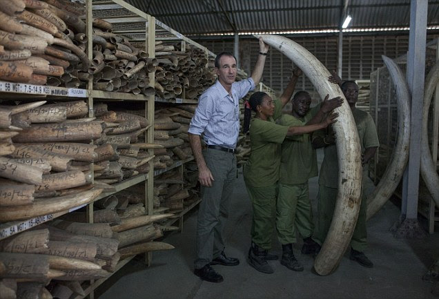 Mail On Sunday reporter Martin Fletcher is pictured here with workers at the world's largest ivory stockpile in Tanzania. More than 34,000 tusks weighing roughly 125 tons are stored in the warehouse behind  the Ministry of Natural Resources and Tourism in Dar es Salaam. They would be worth about £150million on China's black market