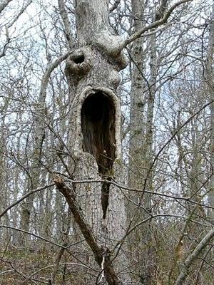 Warga Pondok Pinang Digegerkan Oleh Batang Pohon Ajaib ...