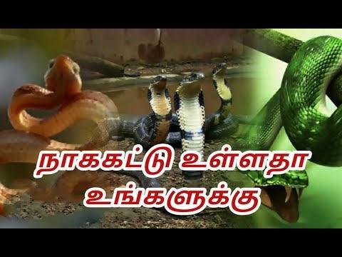 நாகக்கட்டு போடப்பட்டுள்ளதா உங்களுக்கு#seivinai#செய்வினை#பில்லிசூனியம்# த...