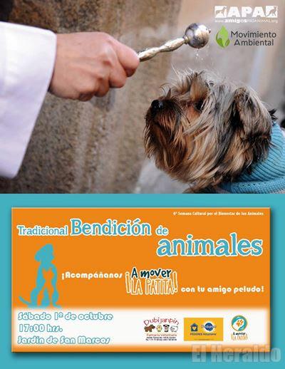 San Francisco De Asis El Primer Protector De Los Animales El