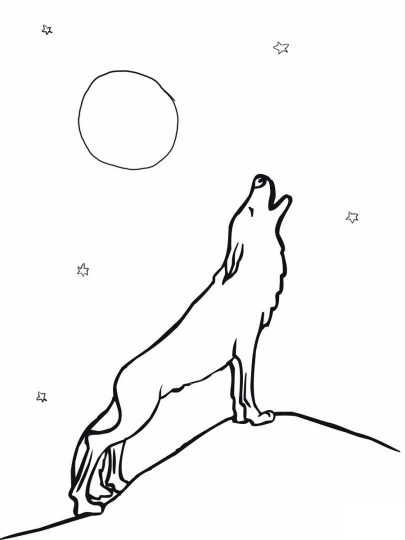 Dibujo De Lobo Aullando A La Luna Imágenes Y Fotos