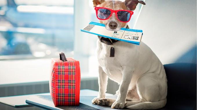 Consejos para preparar el viaje en avión con el perro