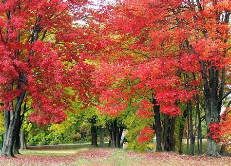 kumpulan gambar pohon wallpaper pemandangan indah