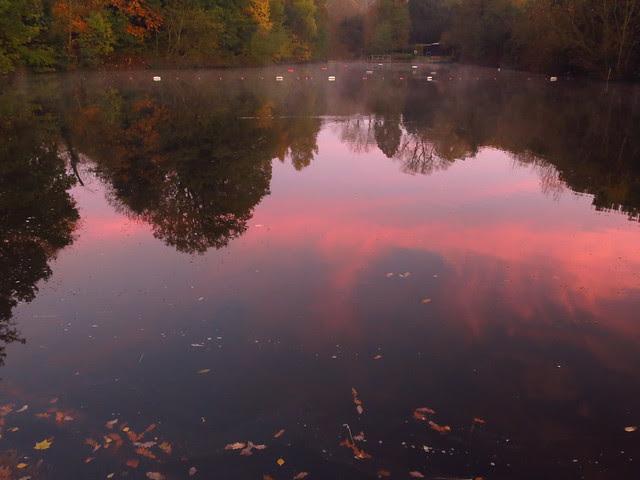 The Mixed Pond at Dawn