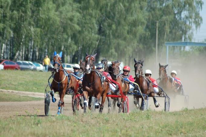 В Орле пройдёт Кубок России для лошадей рысистых пород