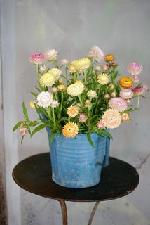pastel straw flowers